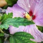 Atelier photo école de la biodiversité