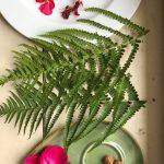 photos de plantes utilisées lors de l'atelier croquis buissonnier et balade botanique avec des roses, des fougères et des géraniums