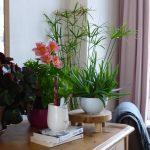 bien choisir sa plante d'intérieur - photo de plantes d'intérieur dont un aloé-verra et une plante à fleur rose