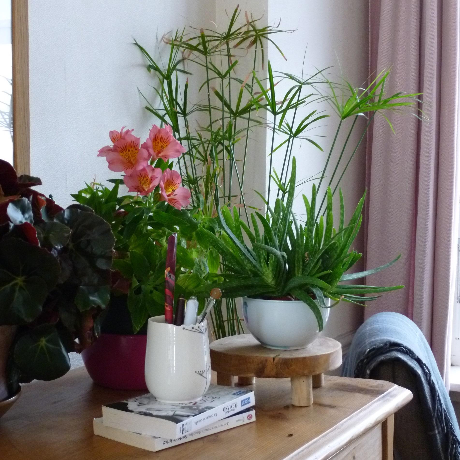 Quelle-plante-dans-ma-maison-SoFizz-2-min