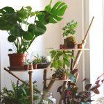 Quelle plante pour mon intérieur