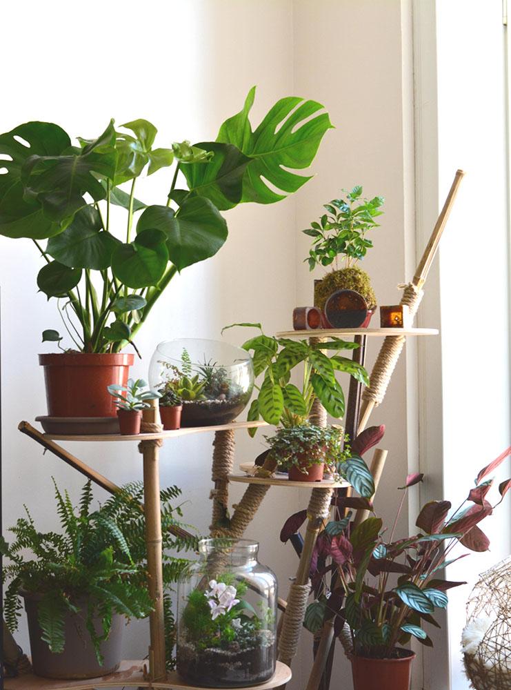 atelier_quelle_plante_pour_mon_interieur_b-min